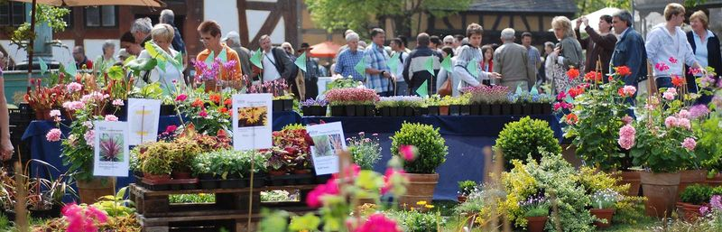 Pflanzen Und Gartenmarkt In Bad Bellingen Pflanzenmärkte In Hessen