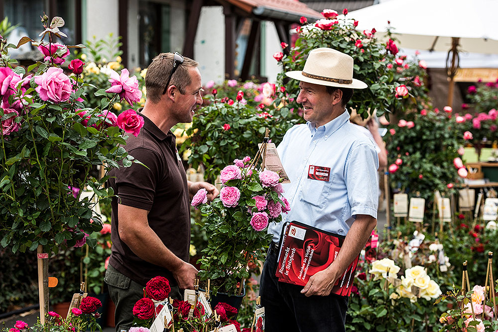 rosenmarkt steinfurth pflanzenm rkte in hessen. Black Bedroom Furniture Sets. Home Design Ideas